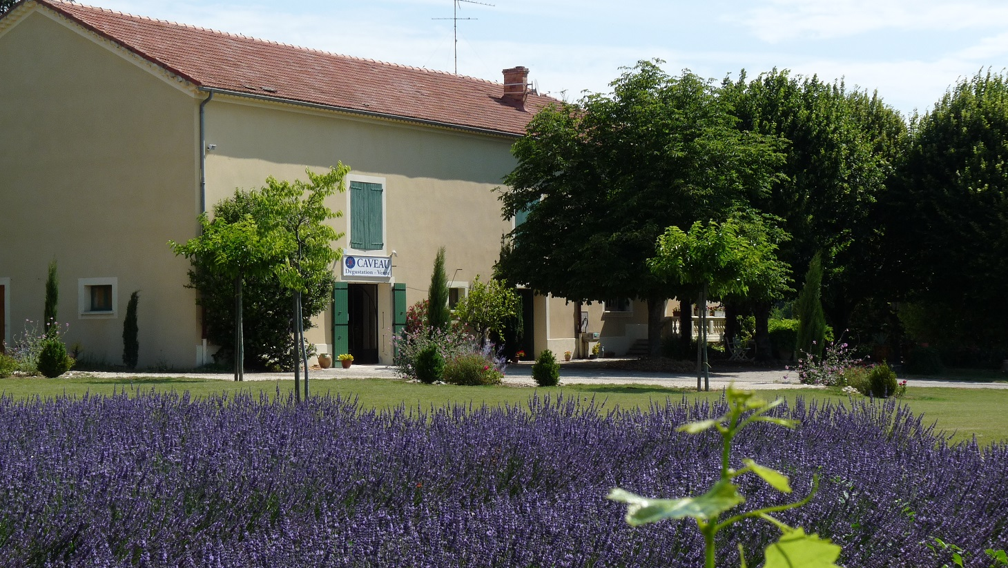 Côtes-du-Rhône – Domaine du Séminaire
