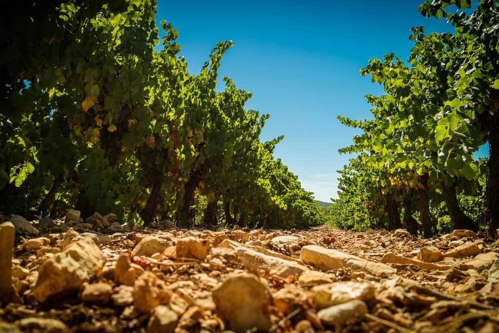 Languedoc – Les Vignerons du Sommièrois