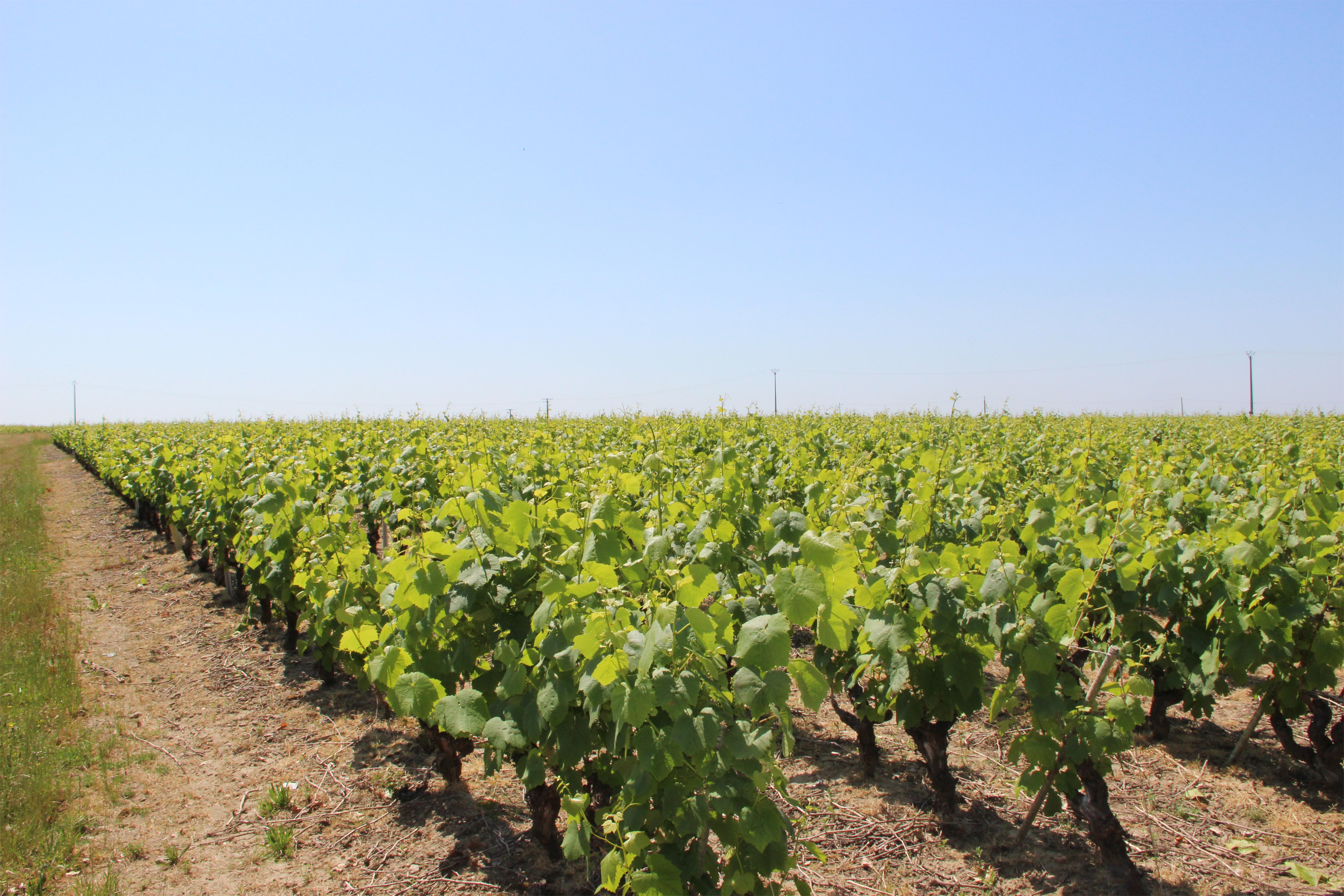 Muscadet – Domain de la Bretonnière
