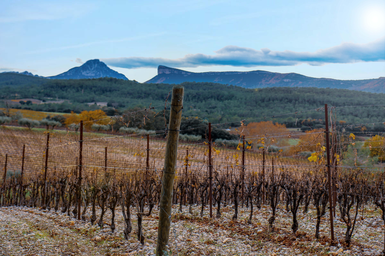 Pic Saint Loup – La Bergerie de Fenouillet