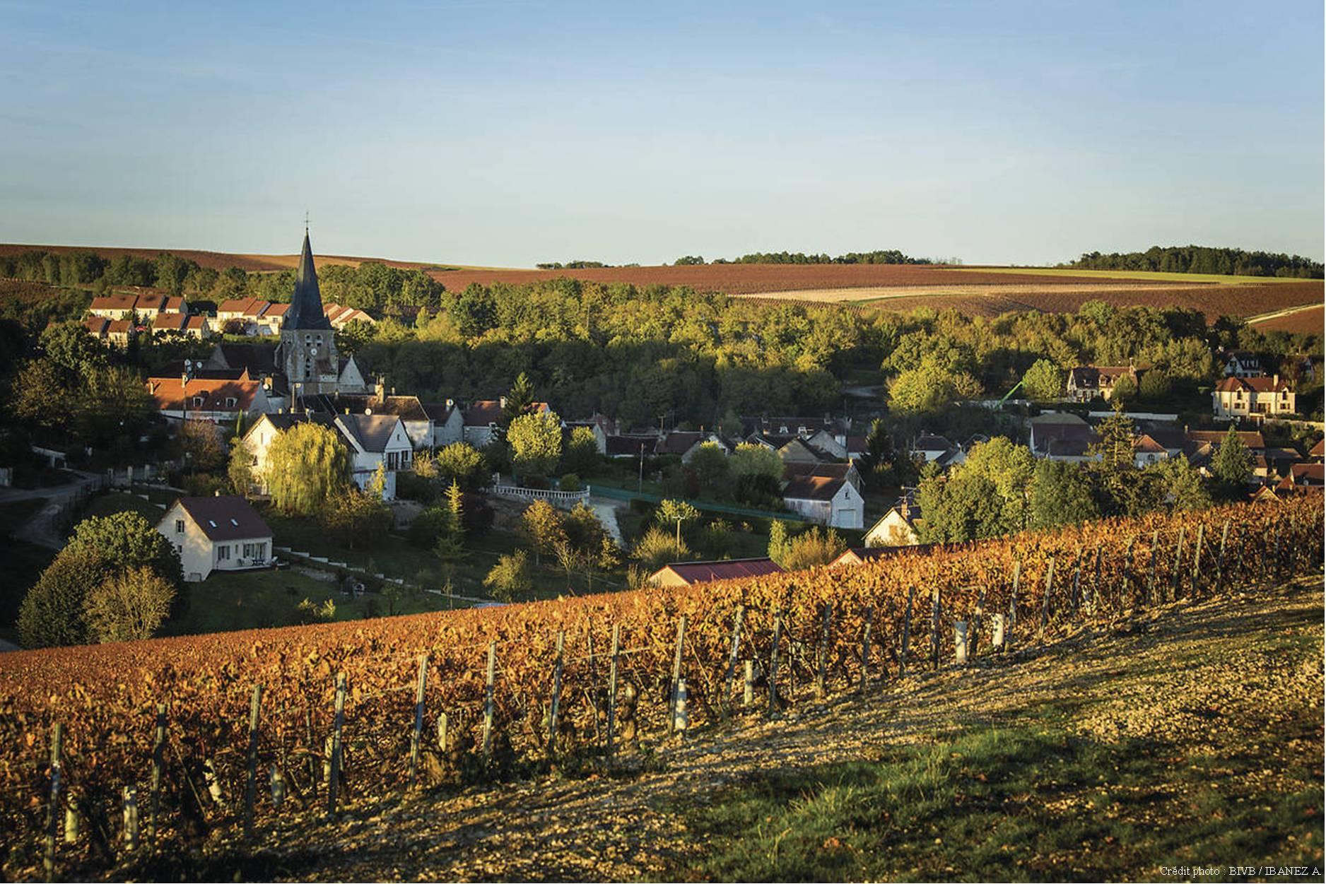 Chablis – Domaine de Pedrycourt