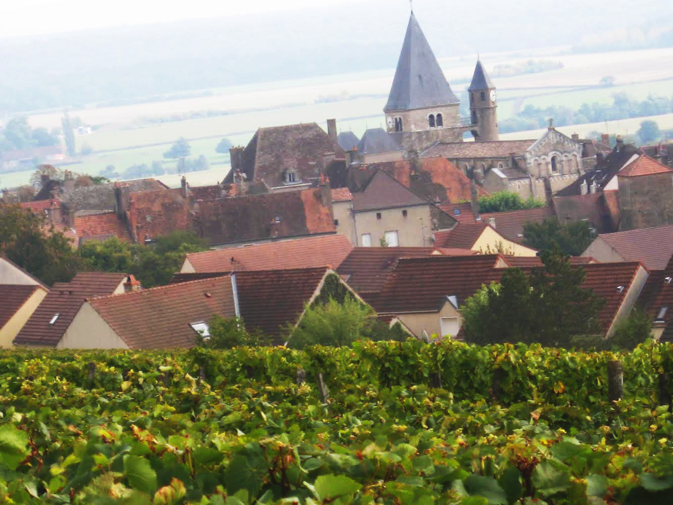 Montagny – Domaine Laurent Cognard & Co