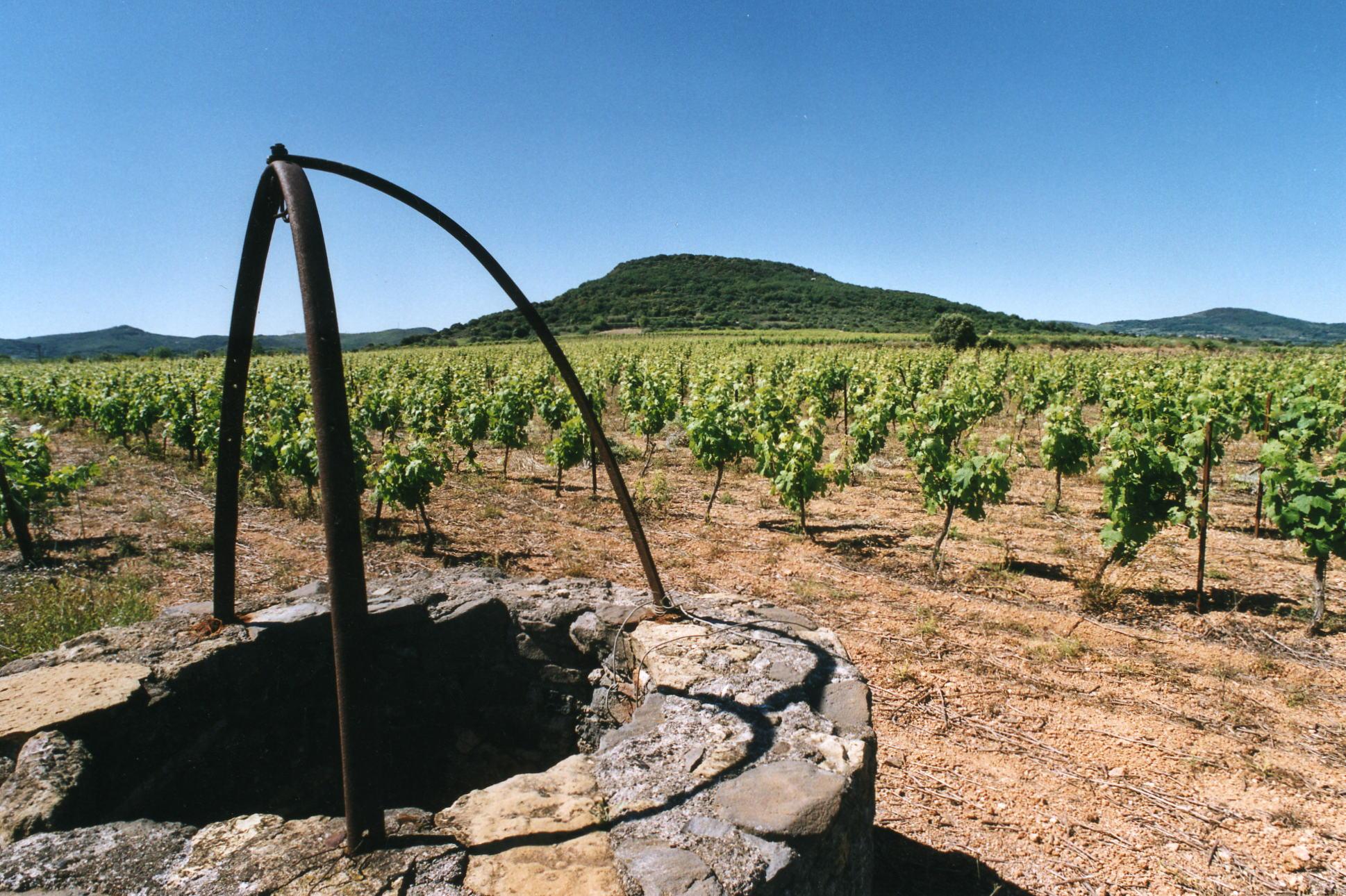 Languedoc – Les Vignerons de Fontès